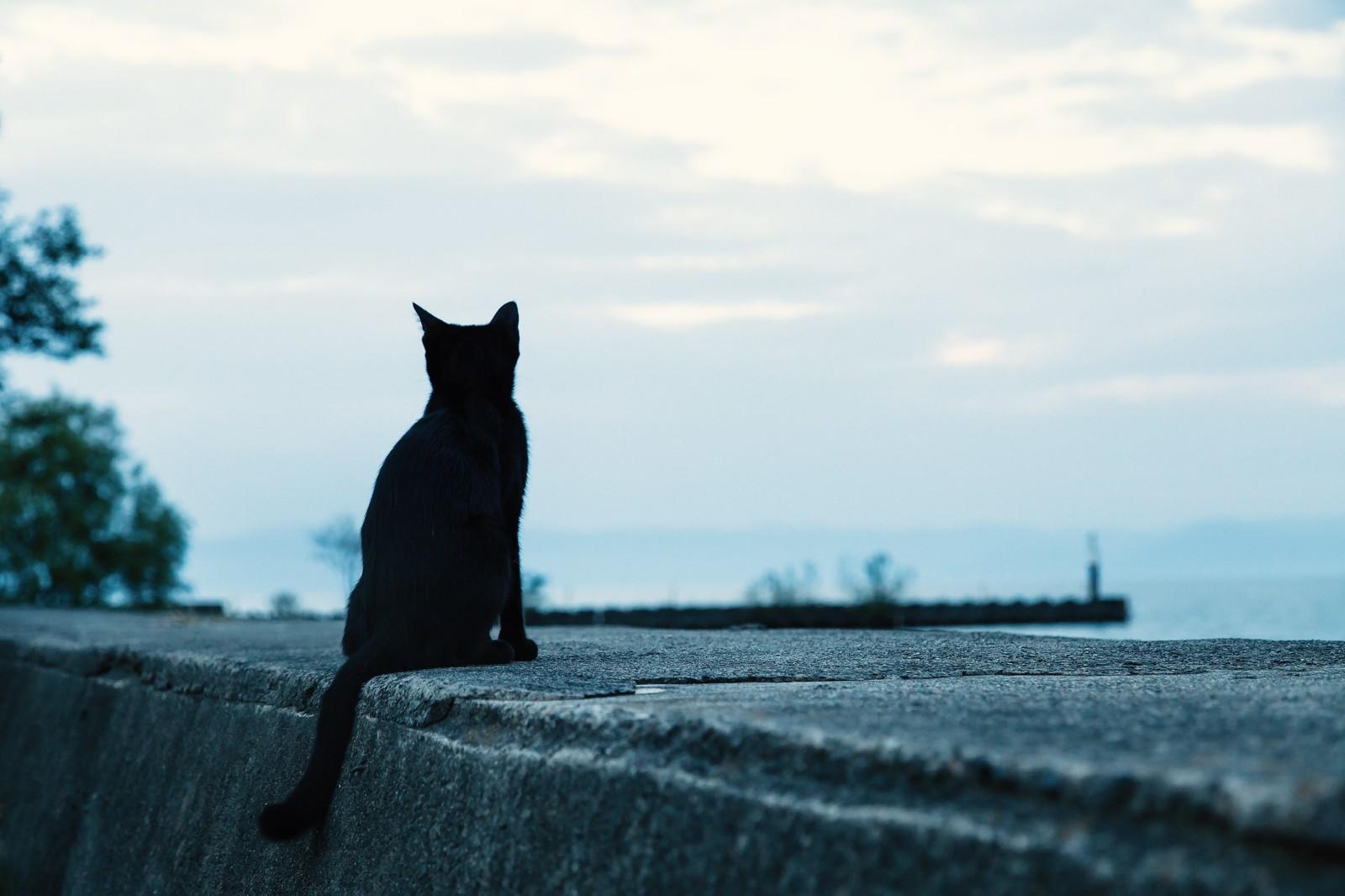 画像:海を眺める猫