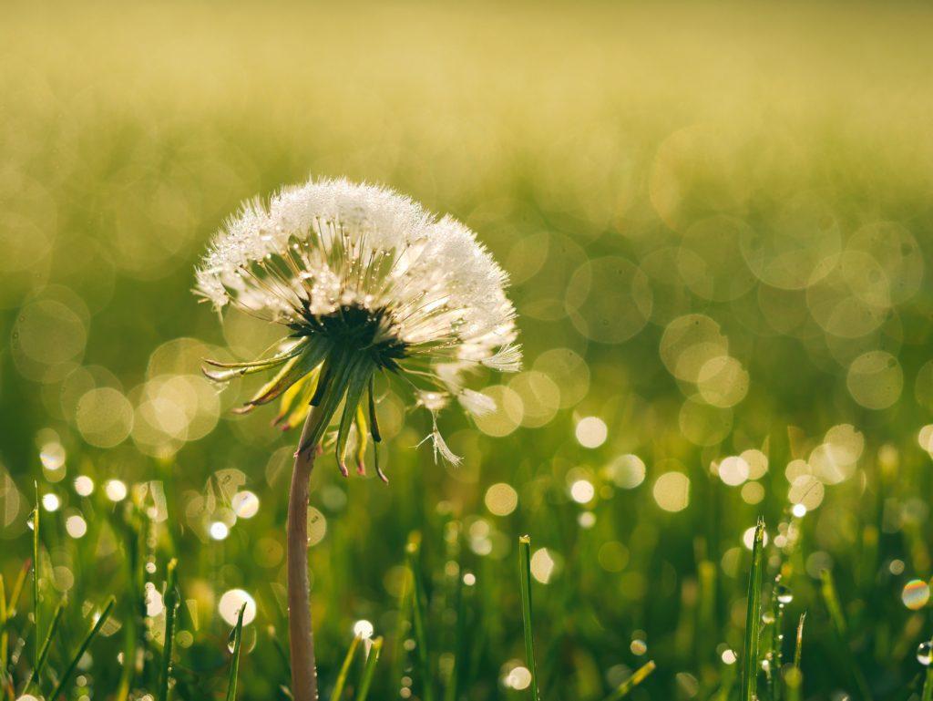 成果がわかるのは、冬に力を蓄えて、春になったら一気に開花する花のようなもの。