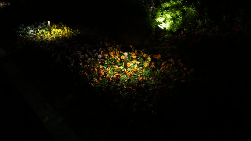 露出(ISO)800 で撮影。暗いですね